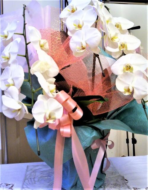ランの花.jpg