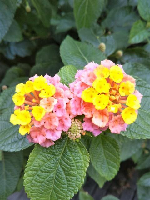 今日のお花.jpg
