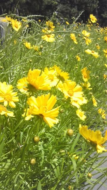 公民館への道端の花.jpg