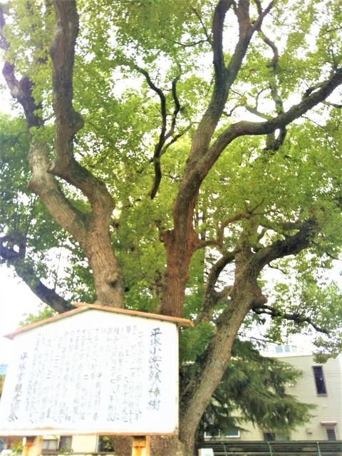楠 崇善公民館前.jpg